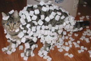 cat packing peanuts